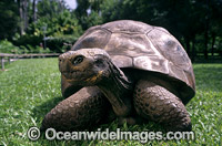 Harriet Giant Galapagos Land Tortoise Photo - Gary Bell
