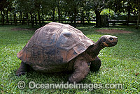 Giant Galapagos Land Tortoise Photo - Gary Bell