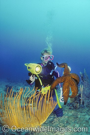 Scuba Diver with Giant Starfish photo