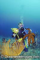 Scuba Diver with Giant Starfish Photo - Gary Bell