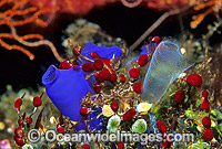 Sea Squirts Photo - Gary Bell