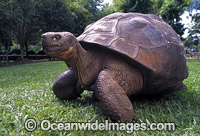 Harriet Galapagos Land Tortoise oot Photo - Gary Bell