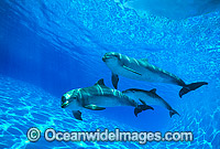 Dolphin mother and baby Photo - Gary Bell