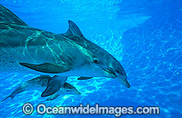 Dolphin mother and baby image