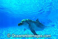 Bottlenose Dolphin Photo - Gary Bell