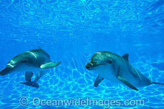 Dolphin pair photo