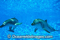 Dolphin pair Photo - Gary Bell