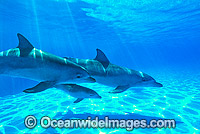 Bottlenose Dolphins Photo - Gary Bell
