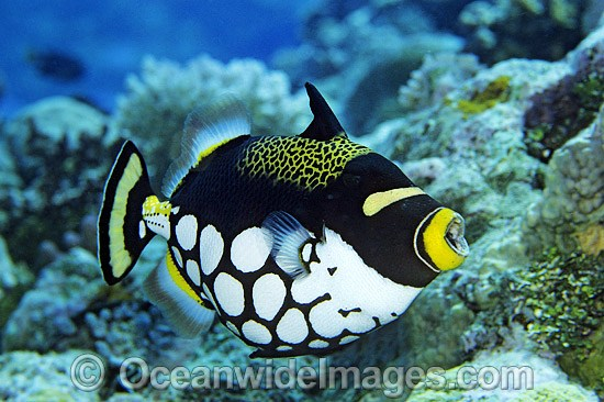 a description of coral reefs as the worlds most beautiful habitats No description  it is one of the most beautiful and colorful habitats known coral reefs   .