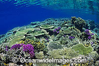 Great Barrier Reef Photo - Gary Bell