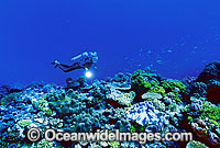 Scuba Diver on Coral reef Photo - Gary Bell