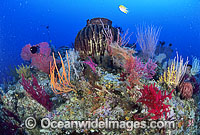 Barrel Sponge Gorgonian Fan Coral Photo - Gary Bell