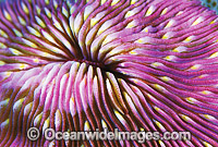 Mushroom Coral Detail Photo - Gary Bell