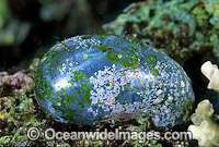 Single-celled Green Algae Photo - Gary Bell