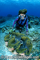 Scuba Diver with Giant Clam Photo - Gary Bell