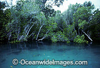Mangrove trees Willie Creek Broom Photo - Gary Bell