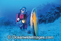 Scuba Diver with giant Sea Pen Photo - Gary Bell