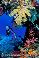 Scuba Diver Soft Coral reef photo