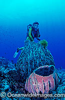 Scuba Diver with giant Barrel Sponges photo