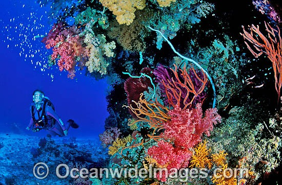 Scuba Diver exploring a Coral reef. Great Barrier Reef, Queensland, Australia Photo - Gary Bell