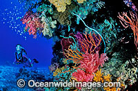 Scuba Diver Coral reef Great Barrier Reef Photo - Gary Bell