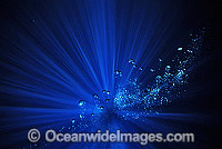 Underwater seascape bubbles Photo - Gary Bell