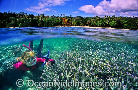 Half under and half over water picture of a female Snorkel Diver / Snorkeler observing a Blue Linckia Sea Star (Linckia laevigata) amongst Acropora Coral garden. Fiji Islands. Photo - Gary Bell