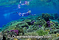 Snorkeller Coral reef Photo - Gary Bell