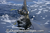Camera attached to dorsal fin of shark