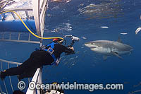 Divers in Shark Cage photo