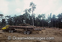 Rainforest Logging Papua New Guinea Photo - Gary Bell