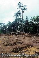 Rainforest Logging Papua New Guinea photo