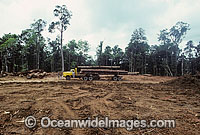 Rainforest Logging Malaysian photo