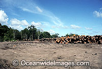Rainforest Logging Papua Photo - Gary Bell