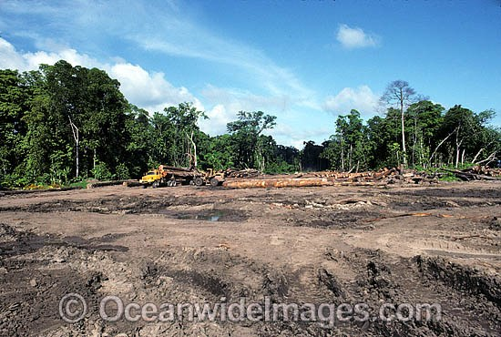 Rainforest Logging Photos, Pictures & Images