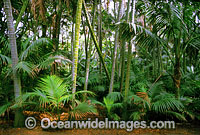 Kentia Palm Forest Lord Howe Island Photo - Gary Bell