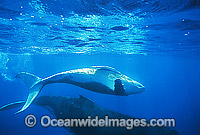Humpback Whale mother with calf