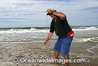 Fisherman catching Giant Beach Worm Photo - Gary Bell