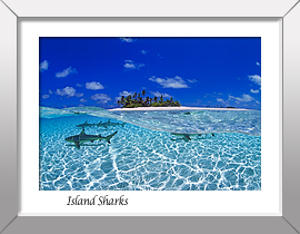 Blacktip Sharks Print