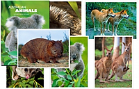 Australian Animals Postcard