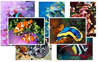Great Barrier Reef Postcards