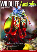 Mantis Shrimp Wildlife Magazine