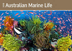 Great Barrier Reef and Fish