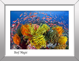 Reef Magic Print