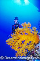 Meri next to a huge yellow soft coral tree