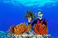 Scuba diver with crinoid featherstars